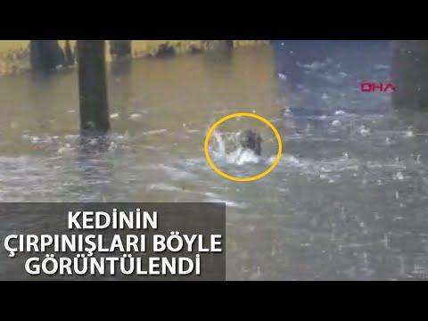 Su Birikintisinde Mahsur Kalan Kediye Yardım Eli