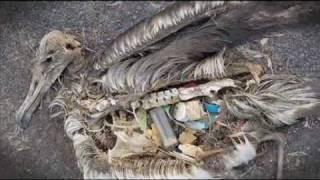 ปลายทางของขยะที่เราทิ้งลงไปในทะเล