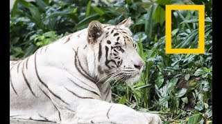 Rarest Animal in the World - Endangered Species (2018 Documentary)