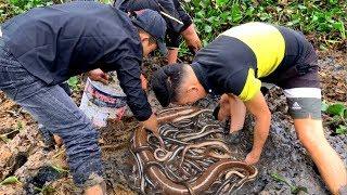 Đào Tổ Lươn Đồng Béo Ngậy Sau Sườn Nhà Mấy Chục Năm Không Biết | Catching Eel From Mud
