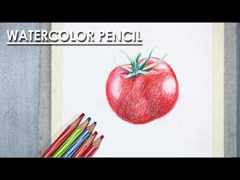 Learn How to Draw A Realistic Tomato with Watercolor Pencil