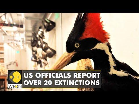 United States declare 23 species extinct, list includes Ivory-billed woodpecker   WION News