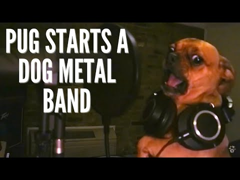 Dog Metal - The Bubbas//Who poo poo'd in my house?