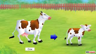 Class 3 Science - Living and Non-living Things | Characteristics of Living and Non-living Things