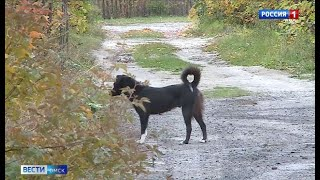 Омич устроил собачий питомник на своём дачном участке