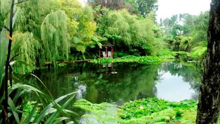 Morning Relaxing Music   Positive Feelings - YouTube