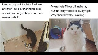 Naughty Cats That Deserve Public Shaming