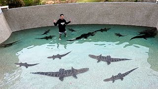 I Filled my Pool with DEADLY ALLIGATORS!! **SWIMMING WITH THEM**