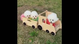 Funny things of cats & dogs and vine 2018