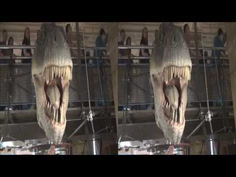 HD 3D Dinosaurs in the Natural History Museum, London