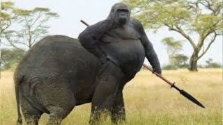 Top 10 Hybrid Animals That Are Hard To Believe Actually Exist