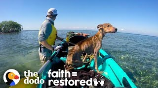 Dog on Remote Island  Near Belize is Rescued and Brought Home   The Dodo Faith = Restored