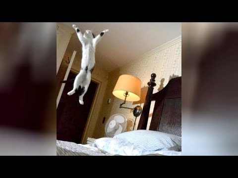 Ultimate TRY NOT TO LAUGH challenge - Hilarious ANIMAL VIDEOS!