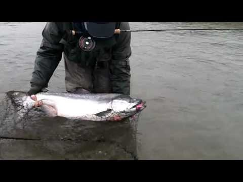 Alagnak River Anglers Alibi