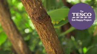 Did you know cinnamon is actually the bark of a tree? See it's fascinating farm to fork journey