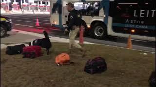 PRF prende traficante e apreende maconha em ônibus com ajuda de cães farejadores em Gravataí