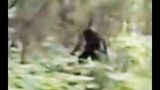 """Impressive Bigfoot Footage"" Hiker films Bigfoot by NVTV - breakdown"