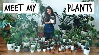 Plant Tour! Meet My Plants & How To Keep Your Plants Alive | HiLesley-Ann