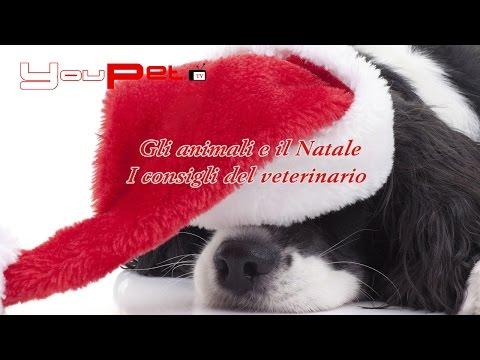 Gli animali e il Natale. I consigli del veterinario