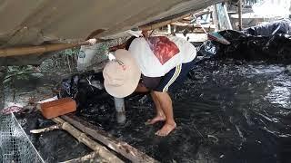Tham quan mô hình nuôi cá trê lót bạt tại Hưng Lạc