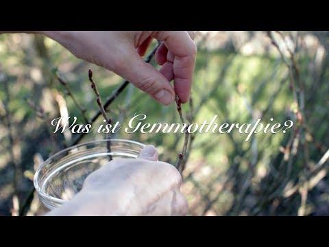 Viriditas Heilpflanzen-Video: Was ist Gemmotherapie?