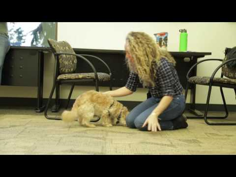 Banfield Pet Hospital - Pet Responsible Workplace Program