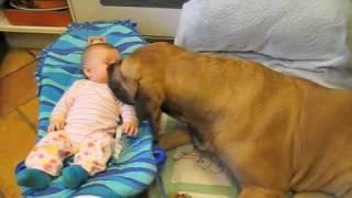 Beba je kihnula a pas je uradio nevjerovatnu stvar! Da li biste željeli ovog psa u blizini svoje bebe? (VIDEO)