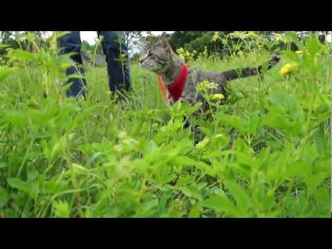 Oskar the Blind Cat - Mother Nature Reunion (Featuring Klaus)