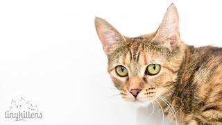 LIVE: Feral mama cats raising their kittens - Nelia & Serenity - TinyKittens.com