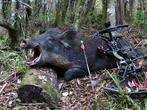 helicopter pig hunting australia with War Pigs California Public Land Bow Hunting For Wild Pigs Rnzwt1v0z1pzsms on Pig Huntingmangamukacolin Blade Nortoncg 838a8a7b608380da741a31 furthermore 6yq8QiaCA1M further 1jci2TfLIOw further Pig Hunt Nt besides 2017.