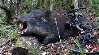 BOW HUNTING BOARS