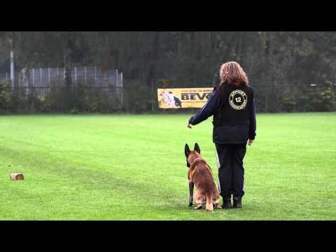 NIK 2015  Jeanette Huizer Wanjeena`s Arno  Obedience