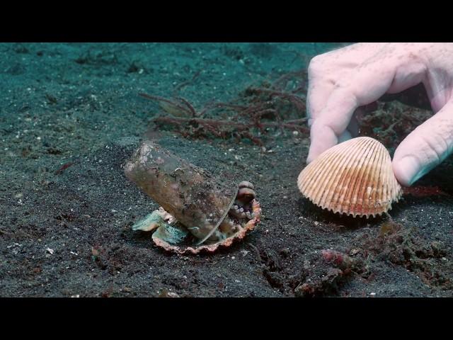 小章魚以垃圾當家 暖心潛水員幫牠成功換屋嘆:委屈你了