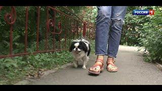 «Вести Омск», дневной эфир от 2 июля 2021 года