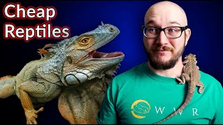 Top 5 Cheapest Reptiles | Are Cheap Reptiles Actual Cheap?