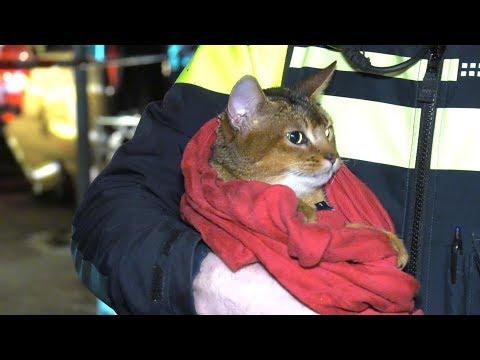 Bewoner springt uit raam na brand Zutphen, brandweer redt kat uit huis  - RTL NIEUWS
