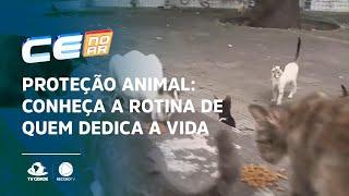 PROTEÇÃO ANIMAL: Conheça a rotina de quem dedica a vida aos animais