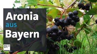 Landwirtschaft in Bayern: Aronia-Beeren aus der Oberpfalz | Abendschau | BR24