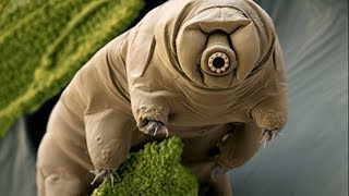 5 Animals That May Actually Be Aliens