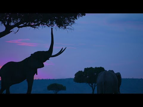 DJI Stories - Protecting Kenya's Elephants from Above