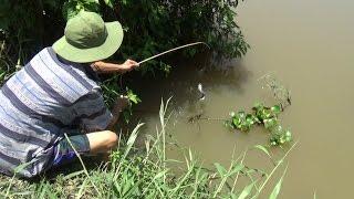 CẮM CÂU MỒI TRÙNG TRÊN SÔNG KHÔNG NGỜ DÍNH NHIỀU LOẠI CÁ (POU PHUNG) - RIVER FISHING