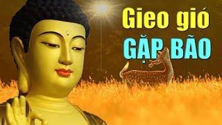Đêm Nghe Lời Phật Dạy ẤM LÒNG Ngủ Ngon Gia Đạo Bình An Mọi Chuyện Suôn Sẻ