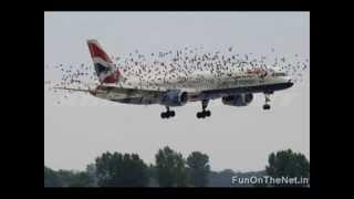 Birds vs Planes amazing vedio
