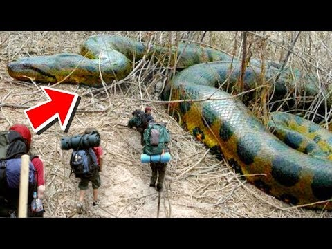 10 Biggest Snakes Ever Found