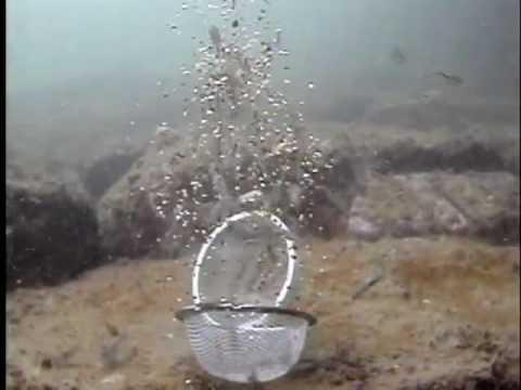 餌まきボールで海底にエビ撒きしてみました - YouTube