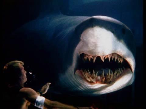 Така е кога се плива со ајкули – возбудливата авантура лесно може да се претвори во вистинска ноќна мора