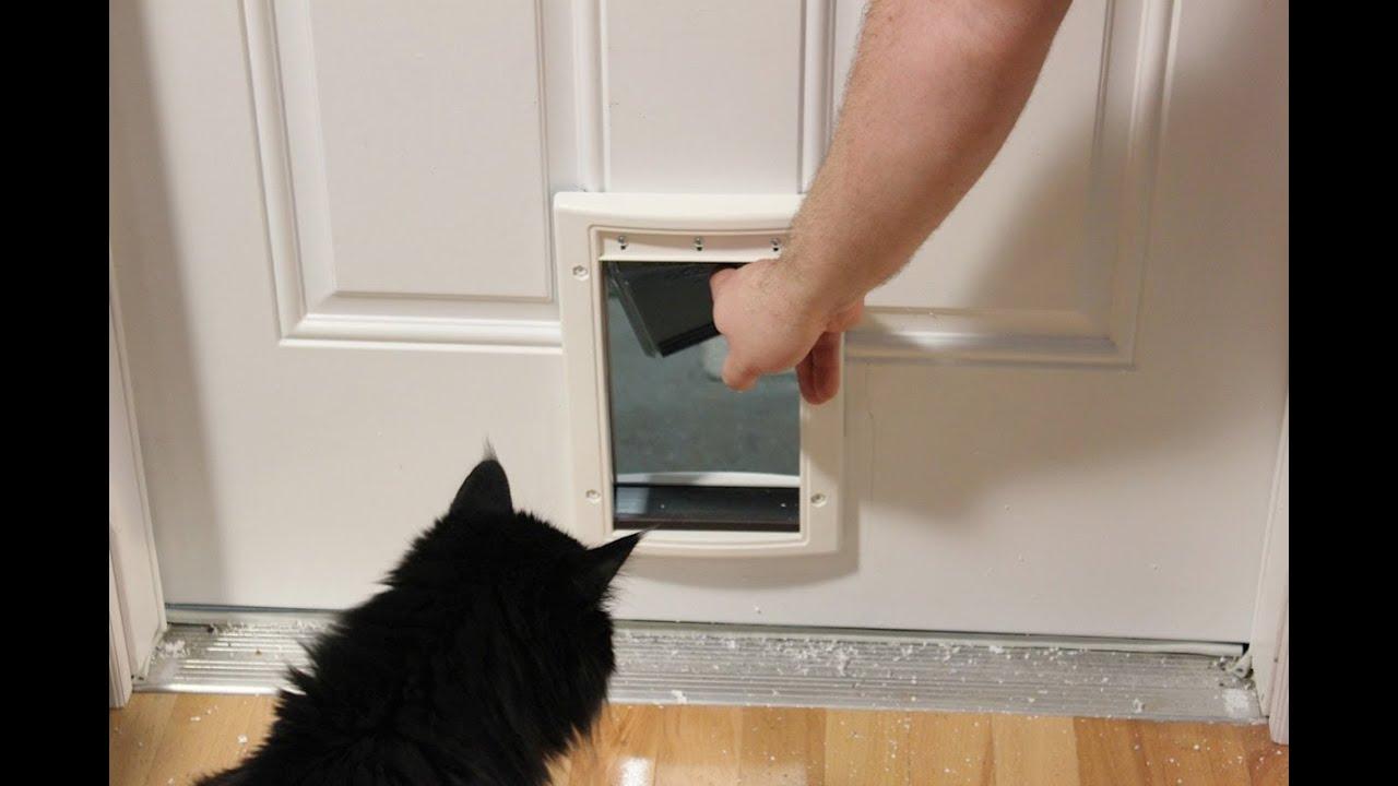 Installing A Cat Door Youtube