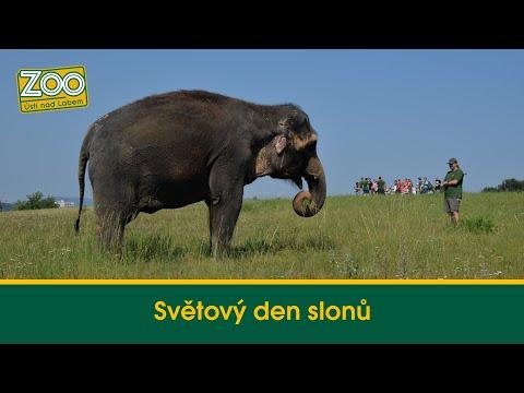 Světový den slonů