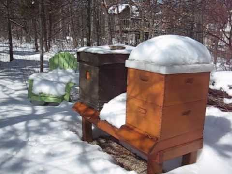Backyard Beekeeping Part 21(S2:E7): Winter Inspection