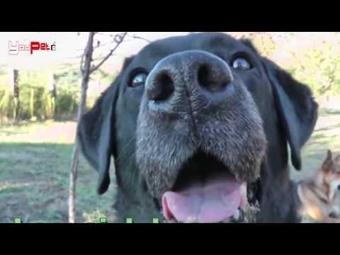 I sensi del cane